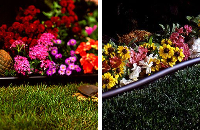 Multi-colored flowers in flower beds