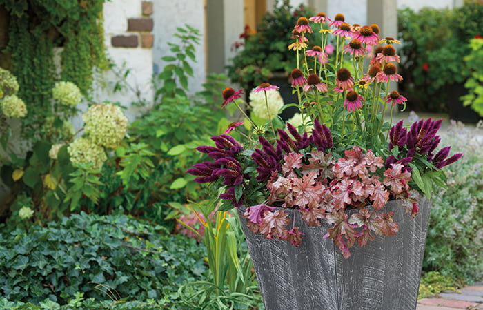 Flowers in a planter