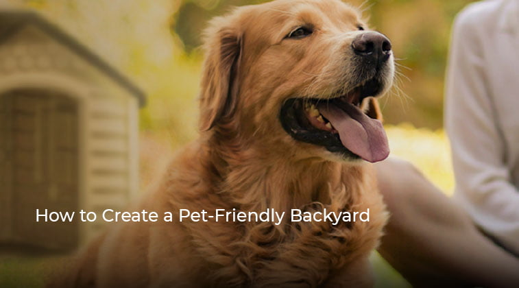 How to Create a Pet-Friendly Backyard