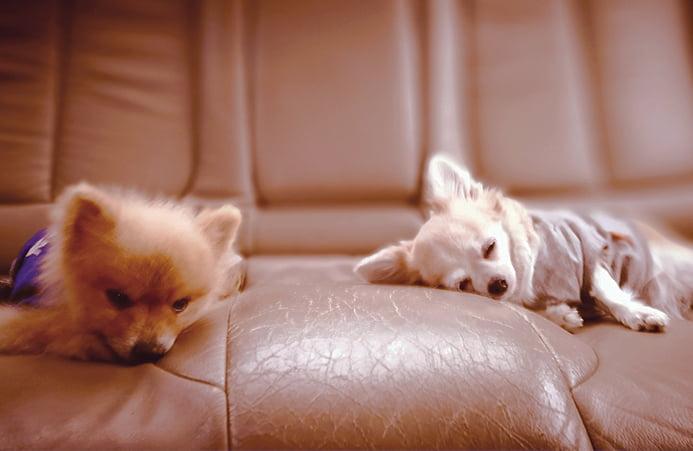 Two sleepy dogs