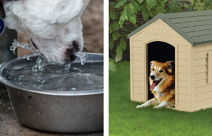 Dog drinking water and a dog house